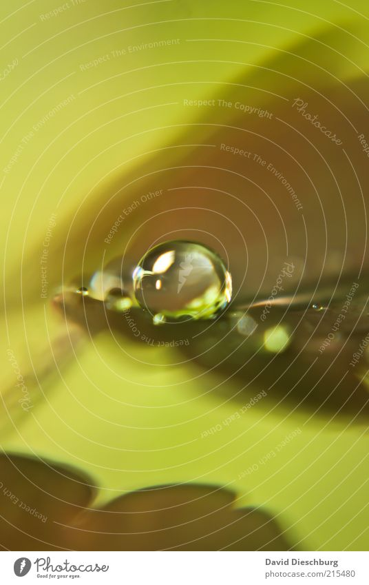 Art of raindrops Nature Plant Water Drops of water Autumn Leaf Brown Green Wet Damp Dew Round Sphere Autumnal Autumnal colours Colour photo Exterior shot