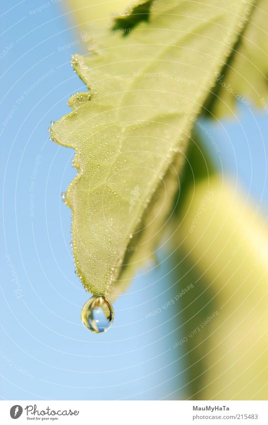 Drop Sky Nature Water Blue Green White Plant Sun Leaf Yellow Grass Food Rain Horizon Gold Drops of water