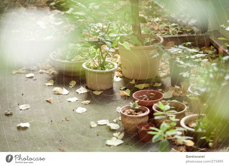 Nature Plant Leaf Autumn Garden Change Gloomy Many Idyll Autumn leaves Flowerpot Autumnal Limp Courtyard Lens flare Pot plant
