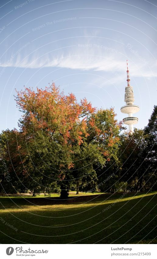 My Hamburg in autumn Television tower Tall Autumn Autumn leaves Tree Maple tree Red Orange Yellow Yellow-orange Russet Leaf Twigs and branches Tower