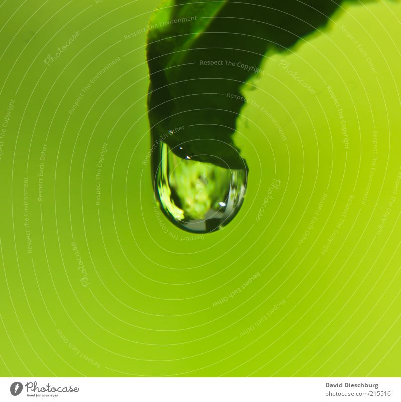Nature Plant Green Summer Water Leaf Calm Life Spring Glittering Fresh Drops of water Wet Round Clarity