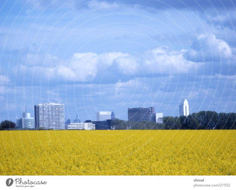 rapsfeld Canola Clouds Yellow Eschborn Frankfurt Blue Sky