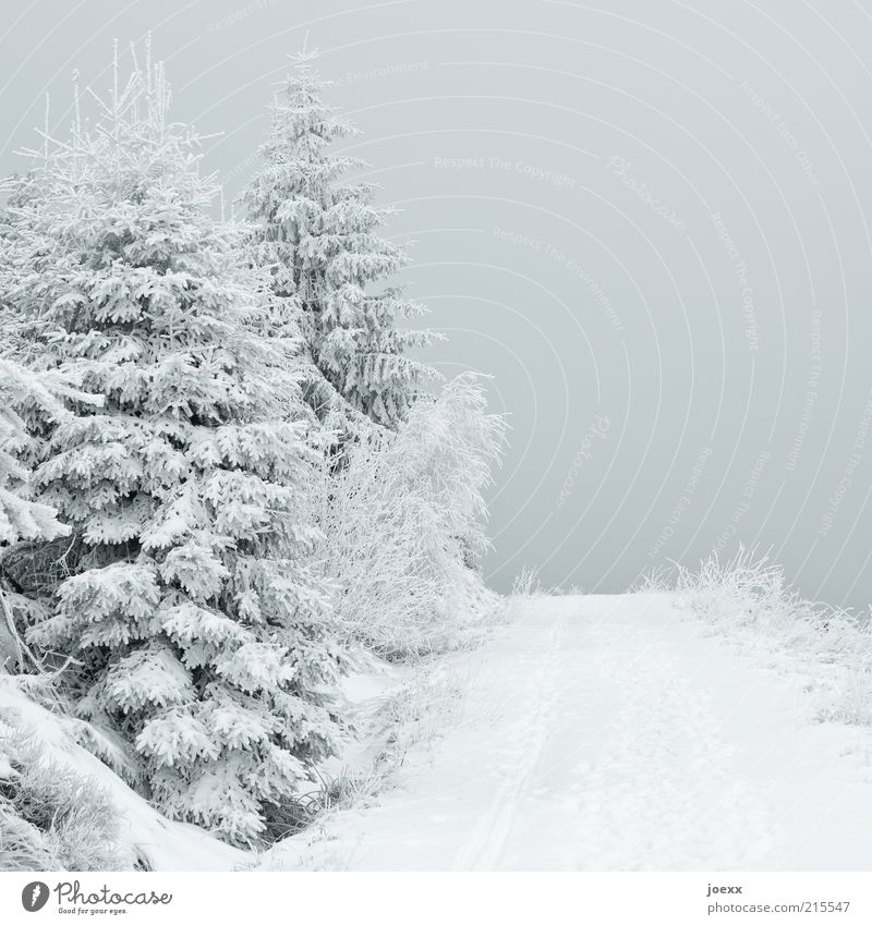 Dark view Nature Sky Ice Frost Snow Tree Forest Lanes & trails Calm Snowscape Colour photo Subdued colour Exterior shot Deserted Day Deep depth of field