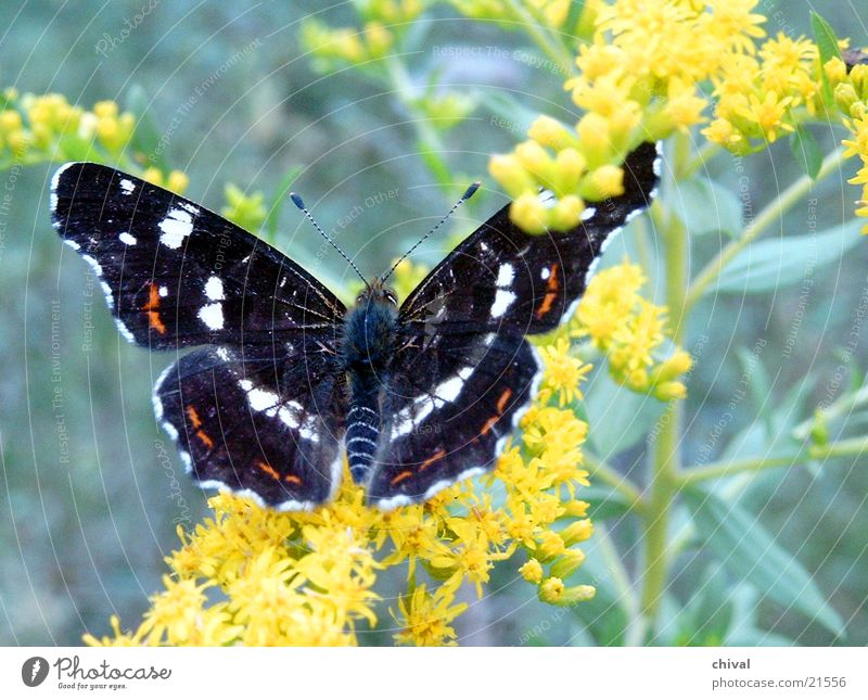 Flower Blossom Butterfly Map butterfly
