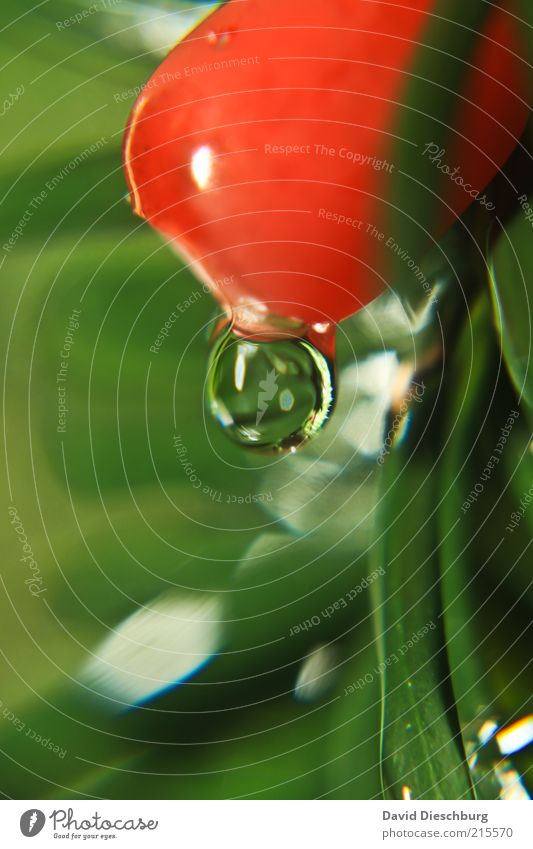 Nature Plant Green Summer Water Red Spring Fruit Bushes Drops of water Wet Round Sphere Dew Damp