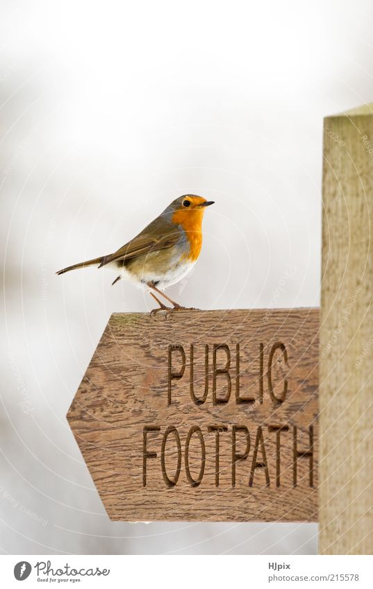 Robin (Erithacus rubecula) Nature Animal Wood Bird Sign Road sign Light