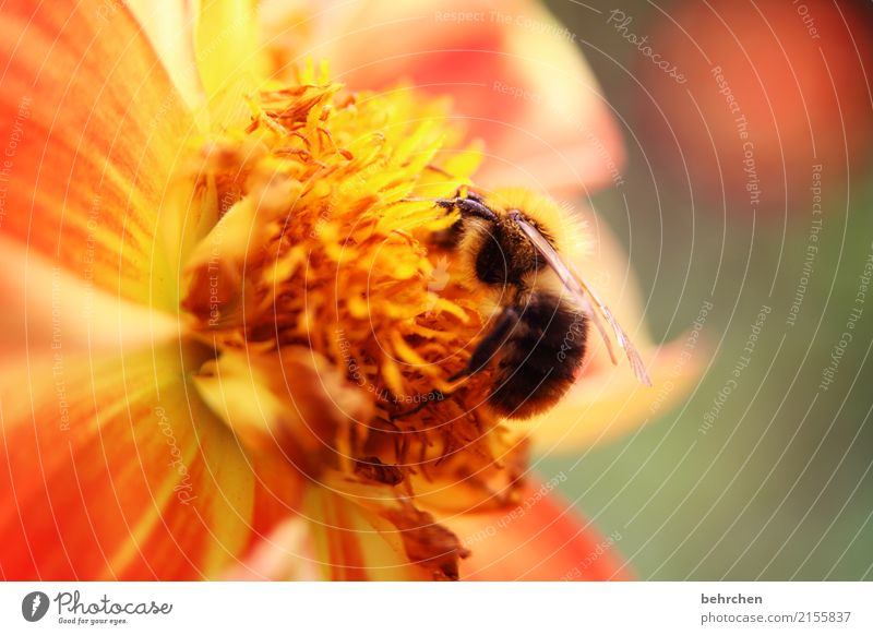 Nature Plant Animal Wild animal Blossoming Wing Bee