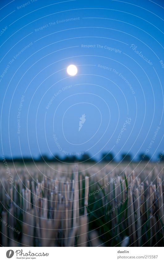 field at night Landscape Autumn Field Blue Harvest Wheat Wheatfield Evening Dusk Night Moon Moonlight Sky Close-up Colour photo Deserted Full  moon Dry