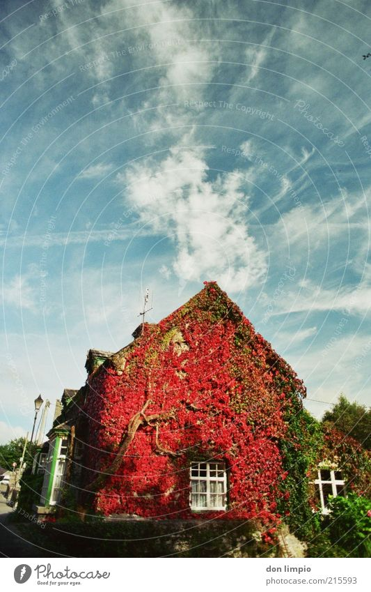 Old Blue Red Vacation & Travel House (Residential Structure) Autumn Garden Wild Idyll Farmhouse Nostalgia Original Rural Ireland Tendril Detached house