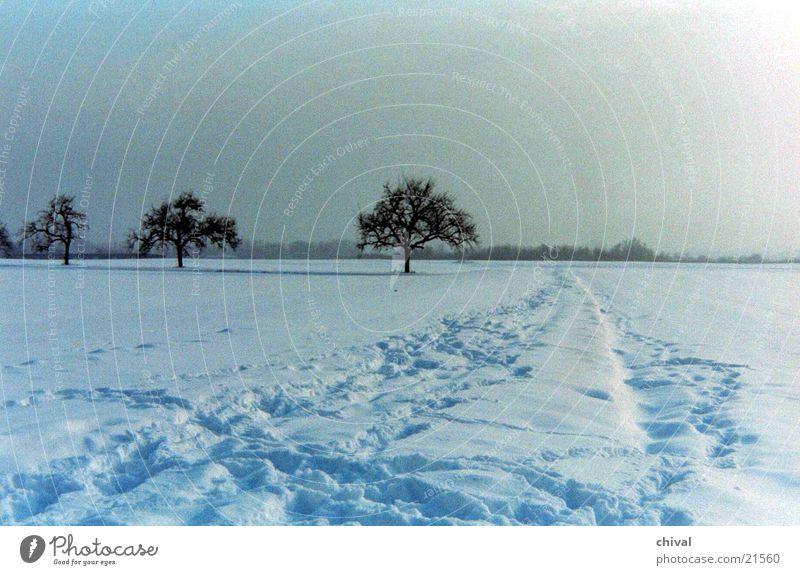 Three trees Winter Snow Sun Fog Far-off places Snow track