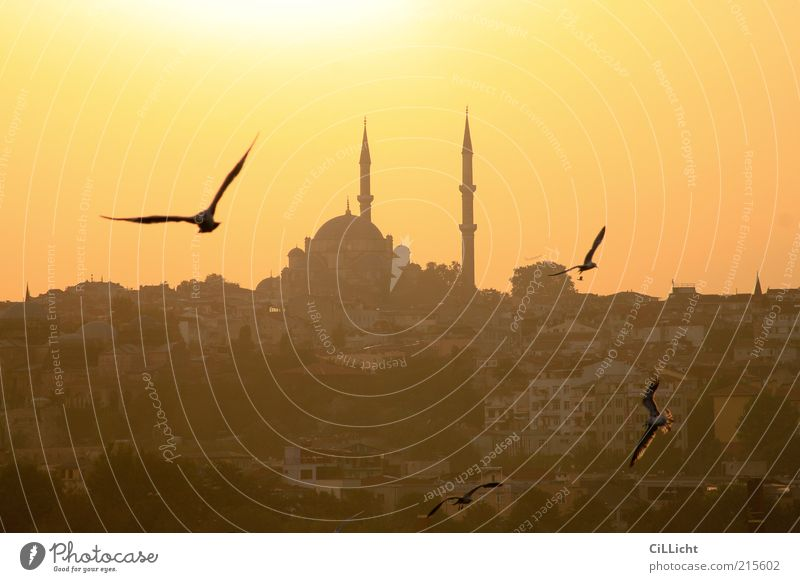 Summer Animal Religion and faith Horizon Bird Flying Europe Group of animals Manmade structures Cloudless sky Dusk Tourist Attraction Pigeon Flock Turkey