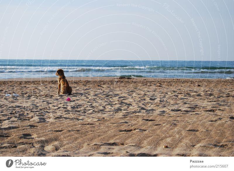 Melancholic Strayer Relaxation Calm Vacation & Travel Far-off places Freedom Sand Air Water Horizon Waves Coast Beach Ocean Animal Dog 1 To enjoy Sit Dream