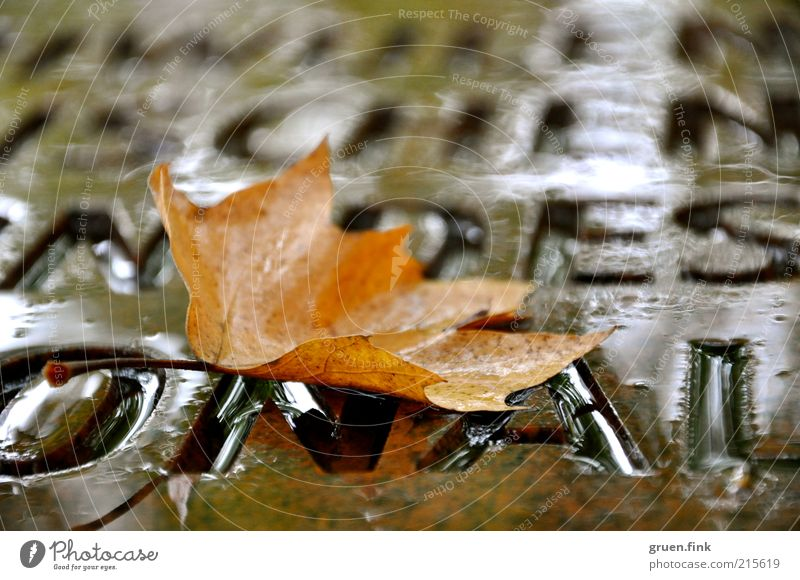 autumn word Water Autumn Bad weather Rain Leaf Monument Brown Beautiful Calm Elegant Transience Word Letters (alphabet) Characters Colour photo Exterior shot