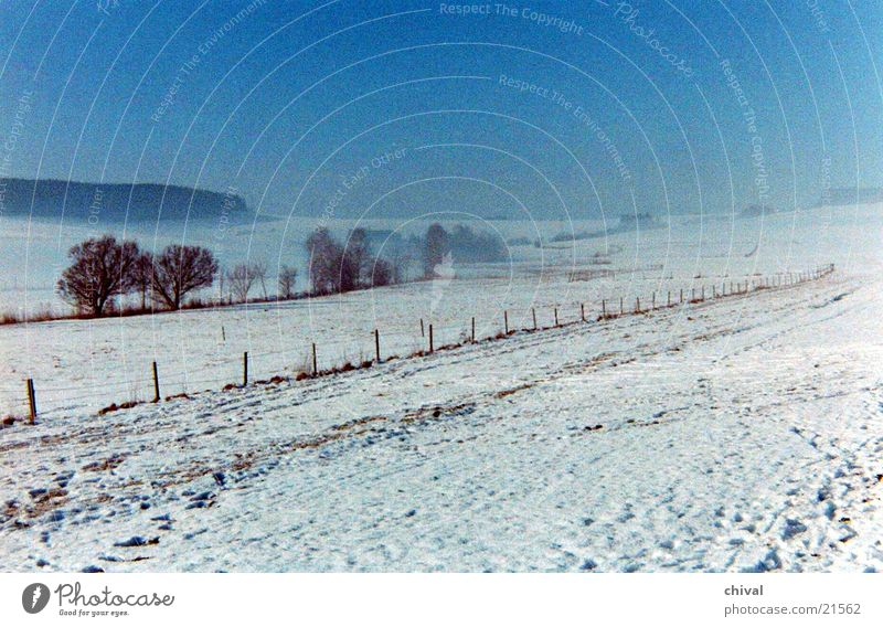 winter landscape Winter Meadow Tree Fog Snow Sun