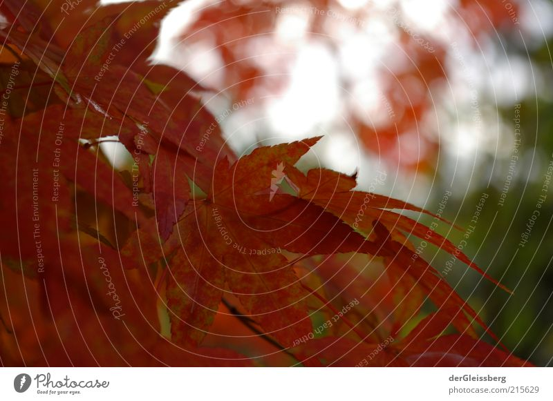 Is it autumn already? Nature Plant Autumn Beautiful weather Tree Leaf Green Red Calm Environment Colour photo Exterior shot Close-up Deserted Copy Space top