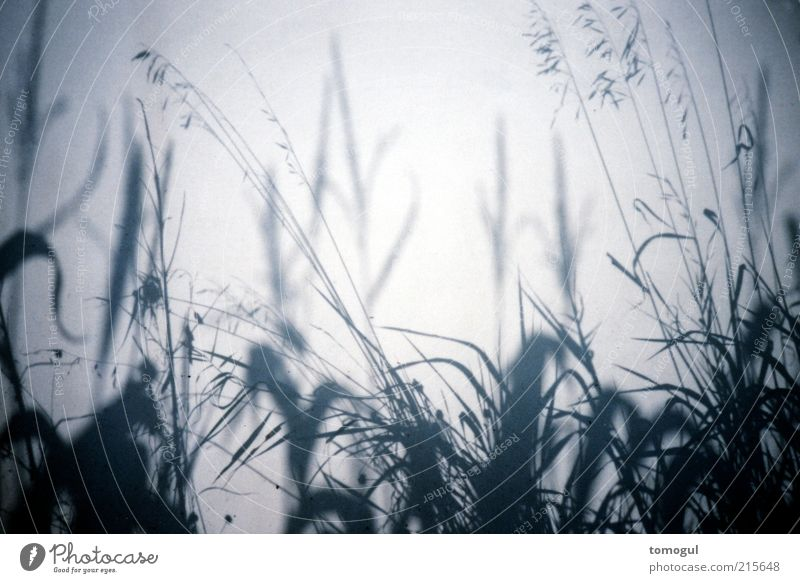At the edge of the field 56b Nature Plant Grass Meadow Field Esthetic Natural Gray Projection Maize Agriculture Boundary marking Fine Delicate Subdued colour