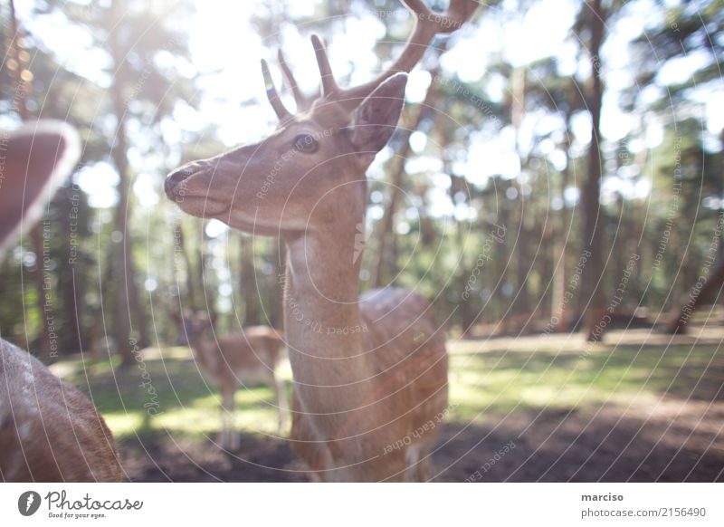 deer Environment Nature Animal Summer Autumn Beautiful weather Park Forest Wild animal Animal face Roe deer Doe eyes Deer To feed Feeding Timidity