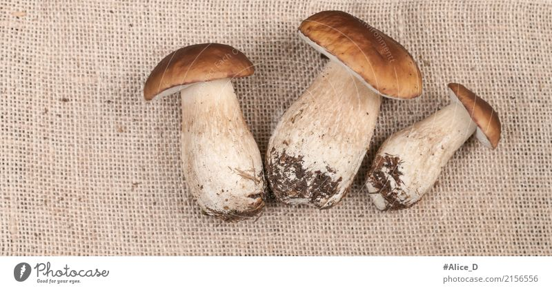 Fresh porcini mushrooms Food Vegetable Mushroom Boletus Nutrition Organic produce Lifestyle Style Healthy Eating Summer Autumn Plant Agricultural crop Forest