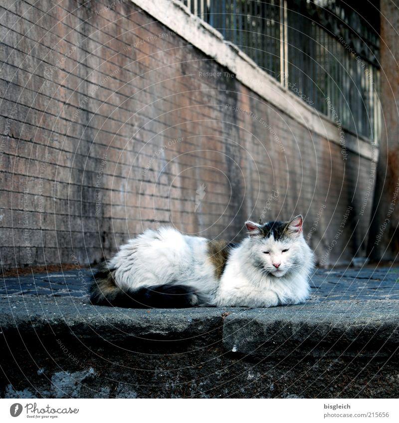 Calm Animal Relaxation Wall (barrier) Cat Contentment Sleep Lie Serene Pet Well-being Emotions