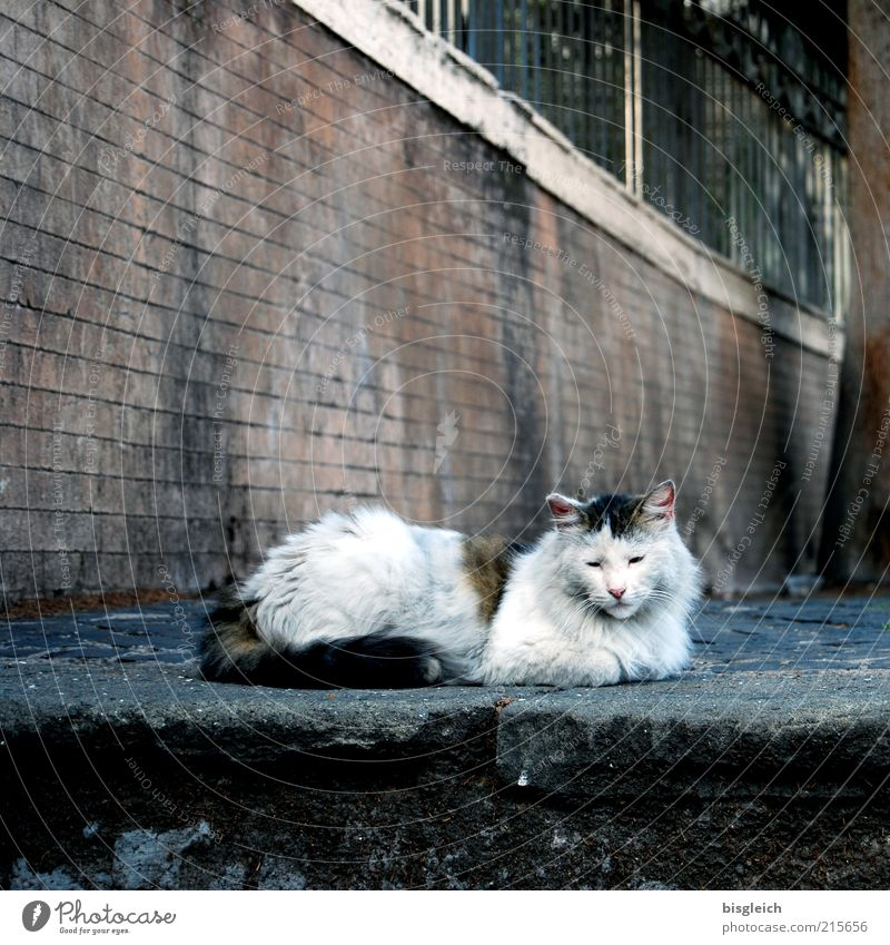 time-out Well-being Contentment Relaxation Calm Animal Pet Cat 1 Lie Sleep Serene Colour photo Subdued colour Day Exterior shot Deserted Wall (barrier) Prowl