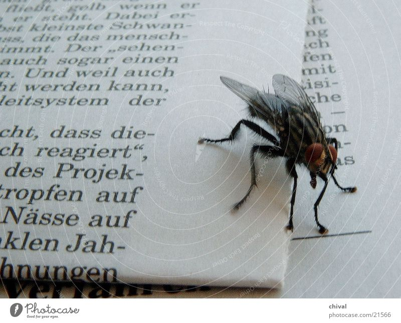Fly Newspaper
