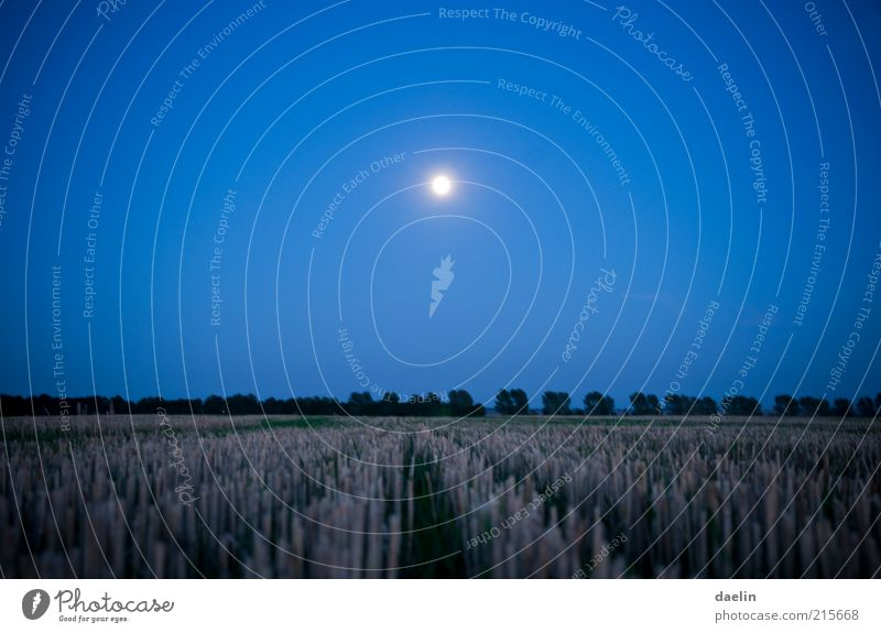 field at night Landscape Field Blue Moon Moonlight Wheat Wheatfield Sky Night sky Dusk Blue sky Colour photo Exterior shot Twilight Deserted Full  moon Calm