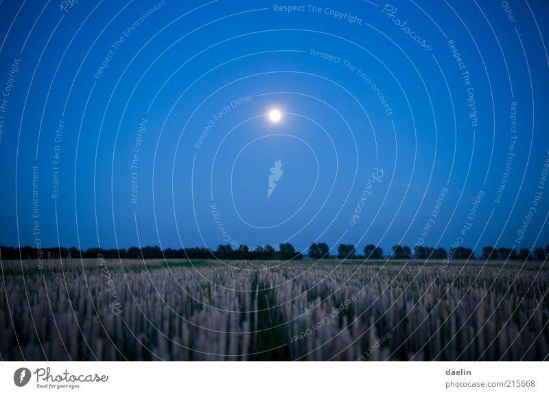Sky Blue Calm Landscape Field Night sky Moon Grain Dusk Blue sky Wheat Night Full  moon Moonlight Wheatfield
