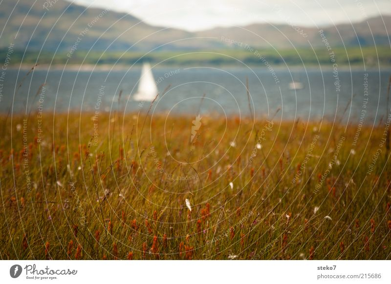 White Vacation & Travel Meadow Grass Landscape Brown Coast Longing Idyll Hill Bay Sailboat Scotland Gorgeous