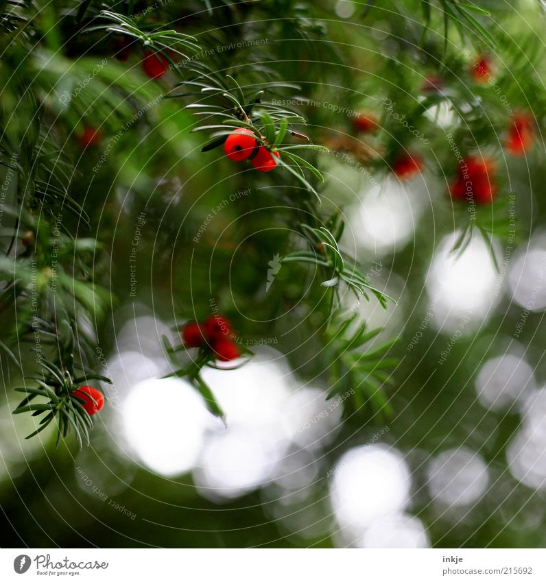 Nature White Green Red Plant Colour Environment Landscape Autumn Above Air Natural Fresh Bushes Threat Hang