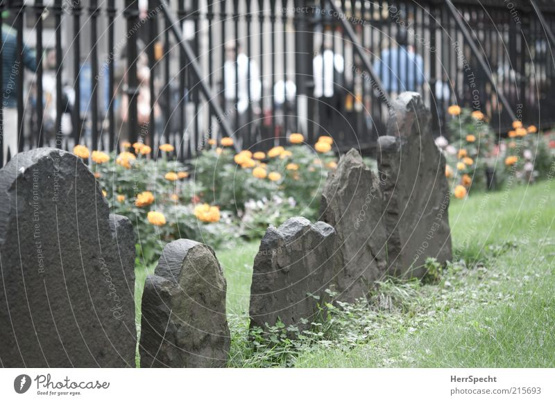 The dead and the living Human being Life Flower Grass Meadow New York City Populated Pedestrian Street Stone Old Cemetery Grave Tombstone Weathered Fence