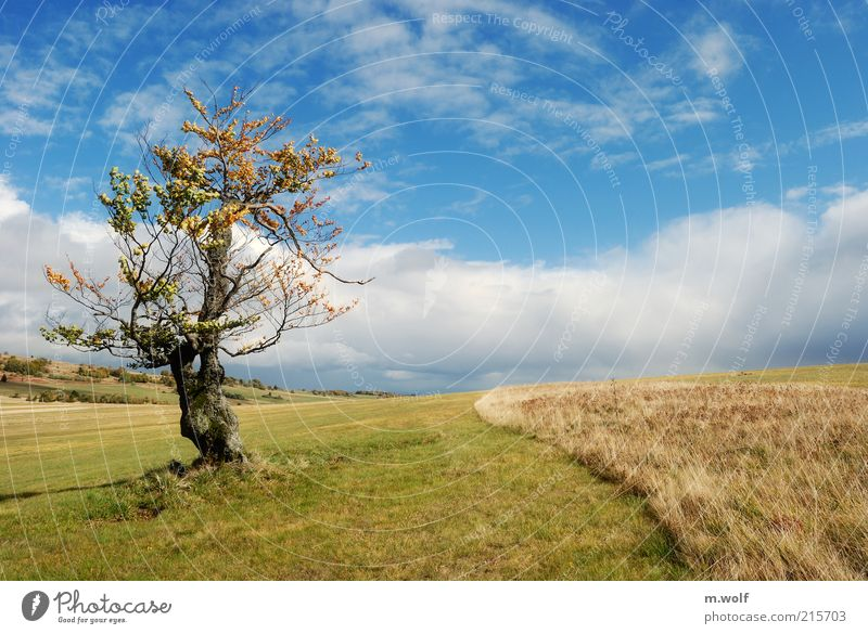 lonesome beech Nature Landscape Clouds Autumn Beautiful weather Tree Mountain Rhön Highlands Blue Multicoloured Green Moody Environment Environmental protection