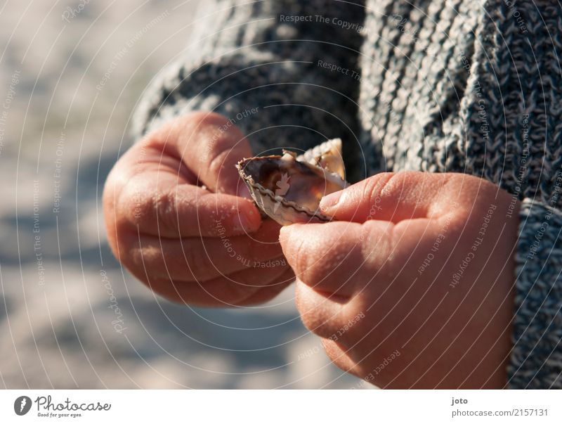 Shell found Contentment Love of nature Leisure and hobbies Children's game Vacation & Travel Trip Adventure Summer Summer vacation Parenting Education Study
