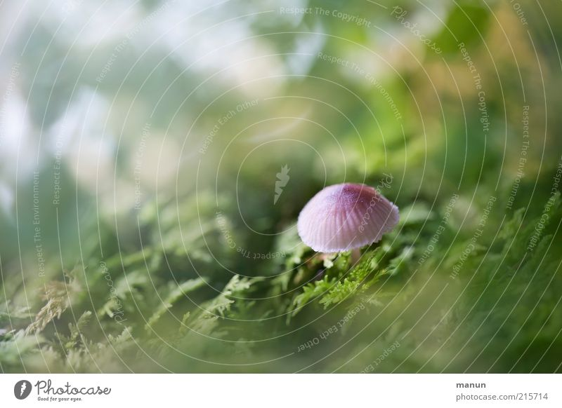offshoot Nutrition Organic produce Vegetarian diet Nature Moss Wild plant Mushroom Autumnal Small Delicious Cute Poison Colour photo Exterior shot Day Sunlight