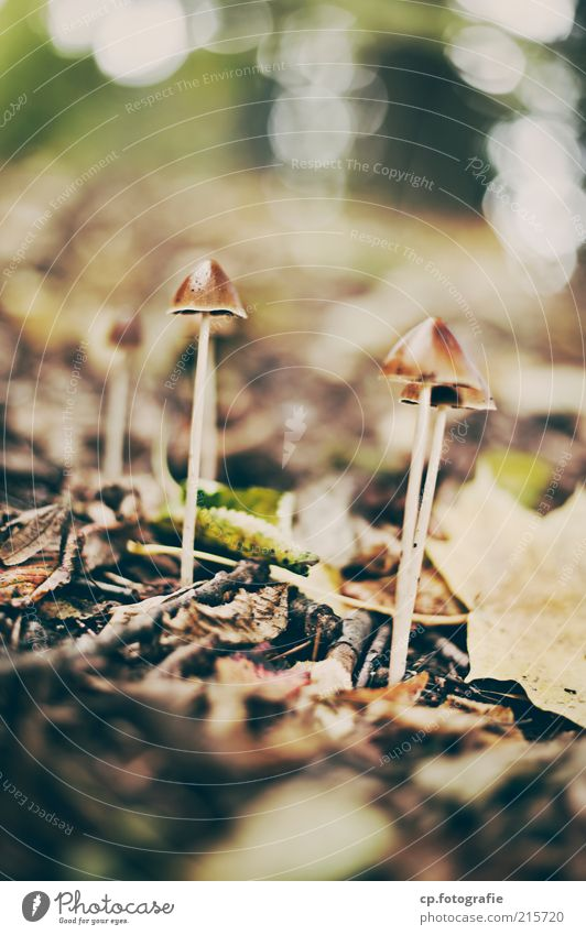 fruiting bodies Environment Nature Plant Autumn Beautiful weather Mushroom Mushroom cap Natural Day Sunlight Shallow depth of field Beatle haircut Woodground