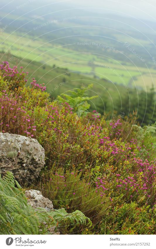 from a hill Trip Summer Summer vacation Hiking Environment Nature Landscape Plant Bushes Fern Wild plant Heathland Hill Ireland Northern Europe Beautiful Green