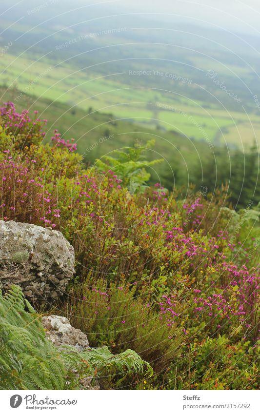 Nature Plant Summer Beautiful Green Landscape Calm Far-off places Environment Stone Trip Horizon Hiking Idyll Bushes Hill