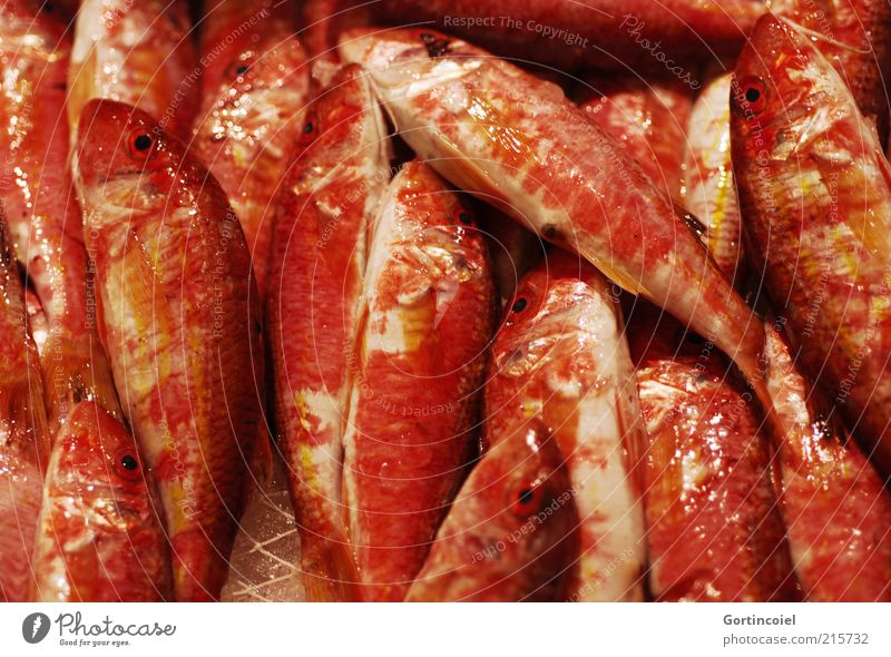 red mullet Food Fish Nutrition Scales Red barb Mullus barbatus Colour photo Multicoloured Close-up Reflection Many Smoothness
