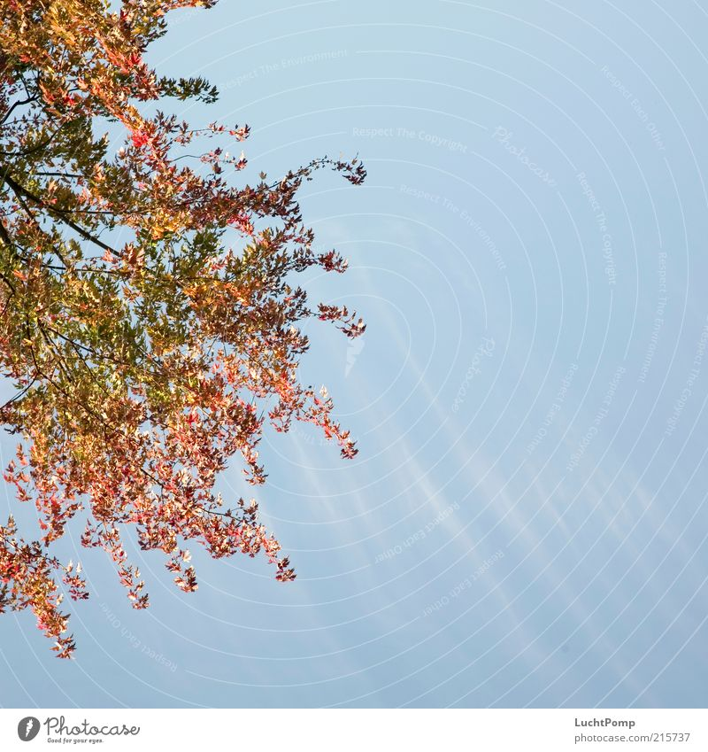 Half Autumn Autumnal Autumn leaves Red Yellow Multicoloured Russet Yellow-orange Orange Twigs and branches Blue Blue sky Light blue Clouds Clouds in the sky