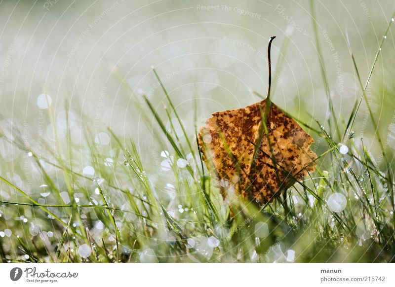 Nature Beautiful Leaf Meadow Autumn Grass Glittering Wet Drops of water Fresh Lie Transience Illuminate Dew Autumn leaves Environment