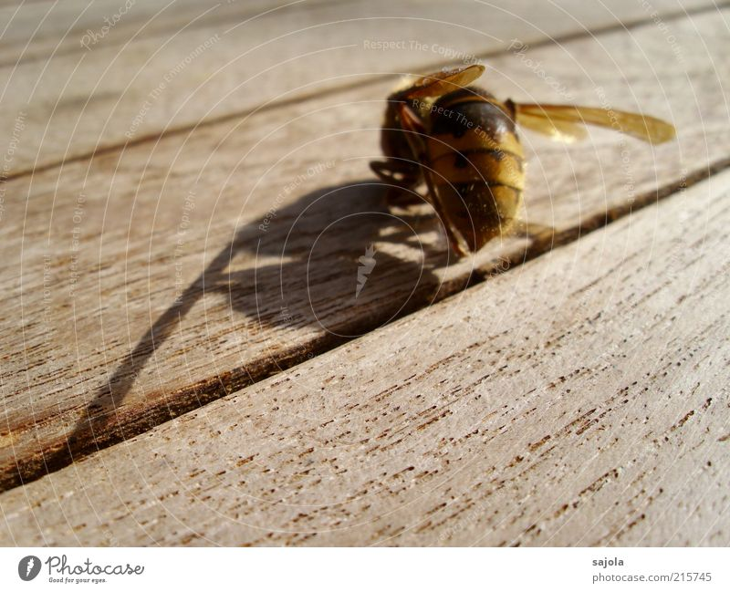 a shadow of itself Animal Dead animal Wing Hornet 1 Wood Sadness Grief Esthetic Transience Change Death Sheath Diagonal Colour photo Exterior shot Close-up
