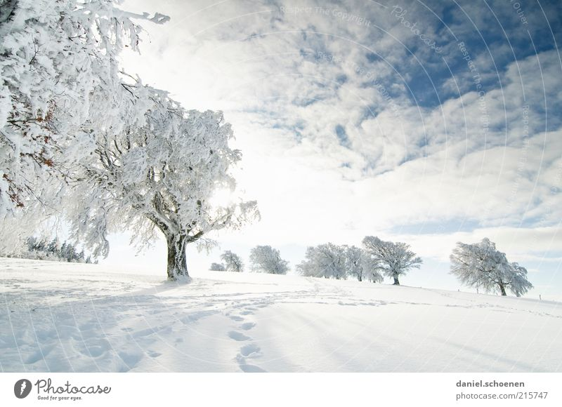Nature Sky White Tree Blue Winter Vacation & Travel Cold Snow Landscape Bright Hiking Environment Trip Hill Frozen