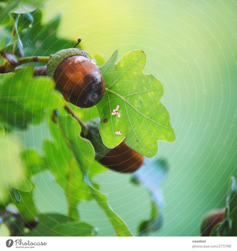 Nature Green Plant Leaf Brown Power Small Environment Growth Positive Twig Organic produce Hard Oak tree Honor Things