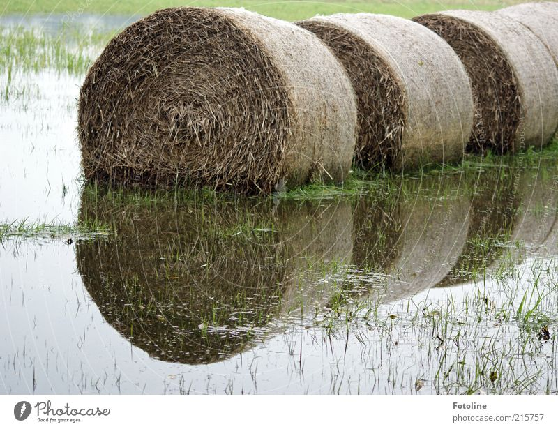 inundation Environment Nature Landscape Plant Elements Water Autumn Grass Meadow Bright Wet Natural Hay Hay bale Straw Bale of straw Deluge Inundated