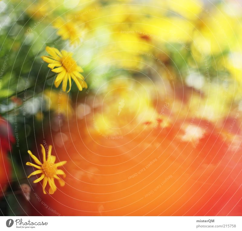 Beautiful Day. Art Esthetic Calm Peace Flower Flower meadow Blossom Blossoming Yellow Decent Warmth Pleasant Ease Background picture Many Blur Spring Summer