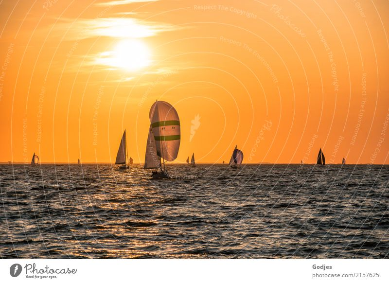 sailing regatta Sports Sailing Regatta Sporting event Water Sunrise Sunset Coast Baltic Sea Navigation Sport boats Sailboat Sailing ship Illuminate
