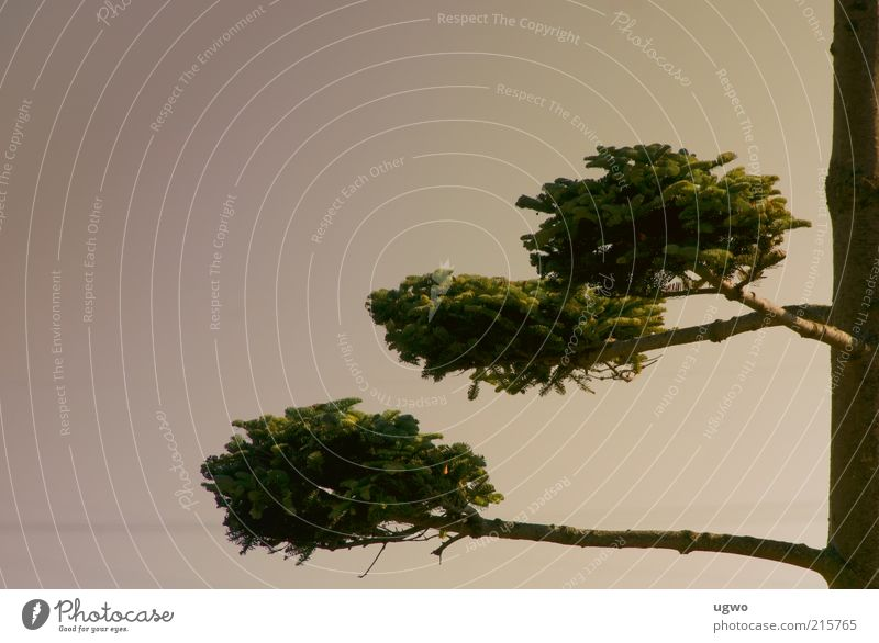 Nature Sky Tree Green Calm Brown Esthetic Growth Round Natural Tree trunk Foliage plant Twigs and branches