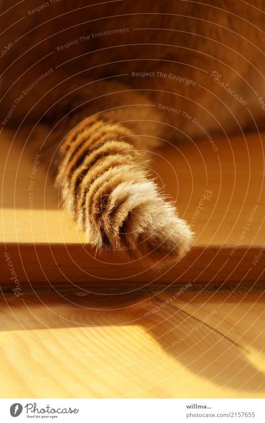 tail-operated Tails Cat Pelt Domestic cat Pet Soft Love of animals Wooden floor Auburn Detail Rear view Animal