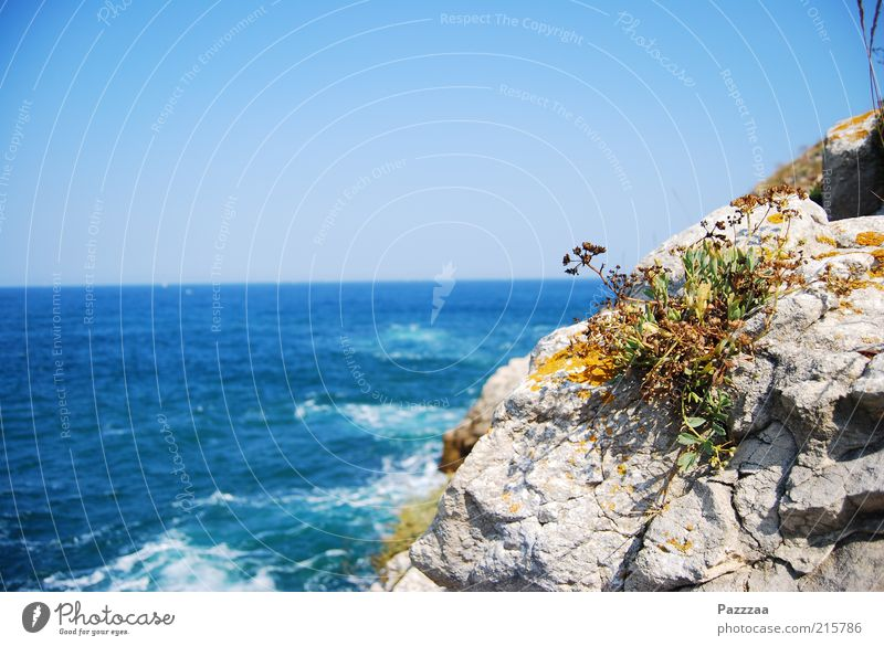seaweed Vacation & Travel Tourism Trip Far-off places Summer vacation Ocean Island Plant Air Water Cloudless sky Flower Grass Rock Waves Coast Bay Blossoming