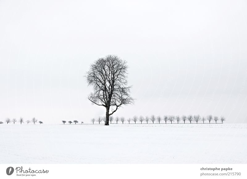 Tree in snowy landscape Winter Ice Frost Snow tree Field Freeze chill White Unwavering Sadness weaker Loneliness Nature Transience Far-off places Subdued colour