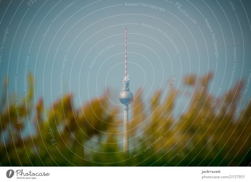berlin plant spring Wild plant Park Capital city Tourist Attraction Landmark Berlin TV Tower Growth Exceptional Far-off places natural Original Force Acceptance